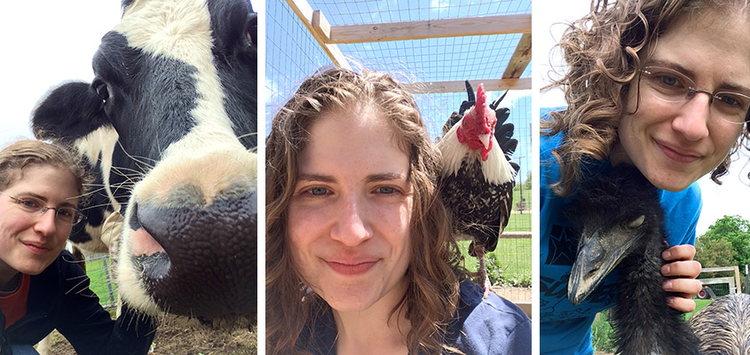 Lauren Hansen with Helen (former dairy cow), Ricky (a bantam rooster) and Rosie (an emu).